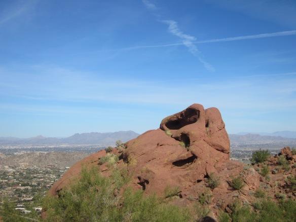 Phoenix 014