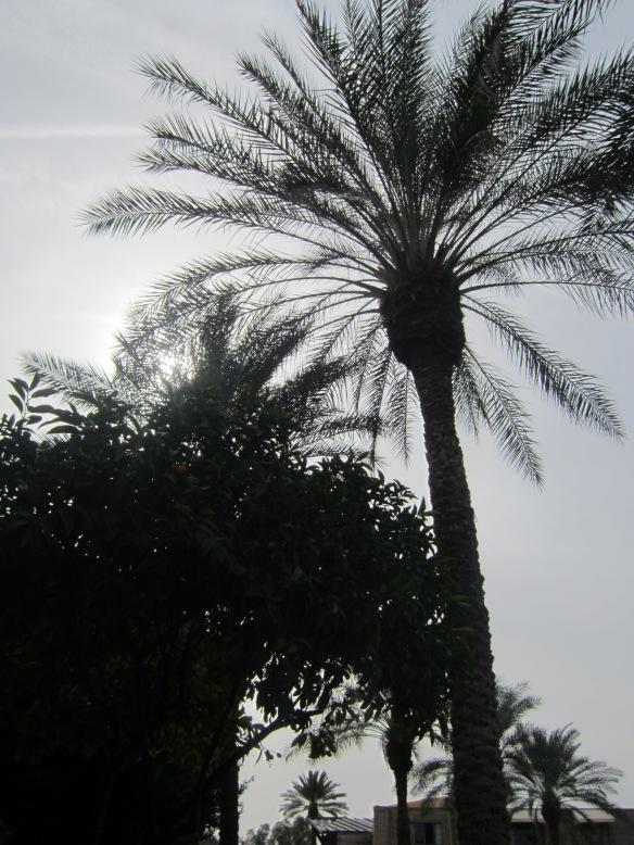 Phoenix 038