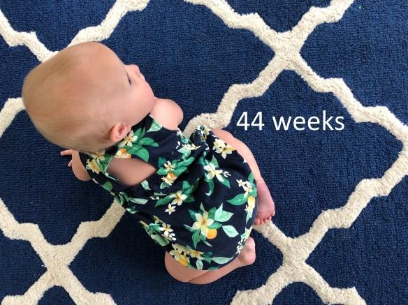 44 weeks.jpg